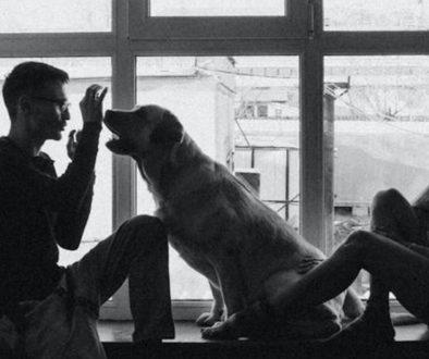 Confiné avec votre animal : les astuces pour que l'enfermement ne tourne pas au vinaigre ! - Blog Animal University - Vivre et travailler dans le respect de l'animal