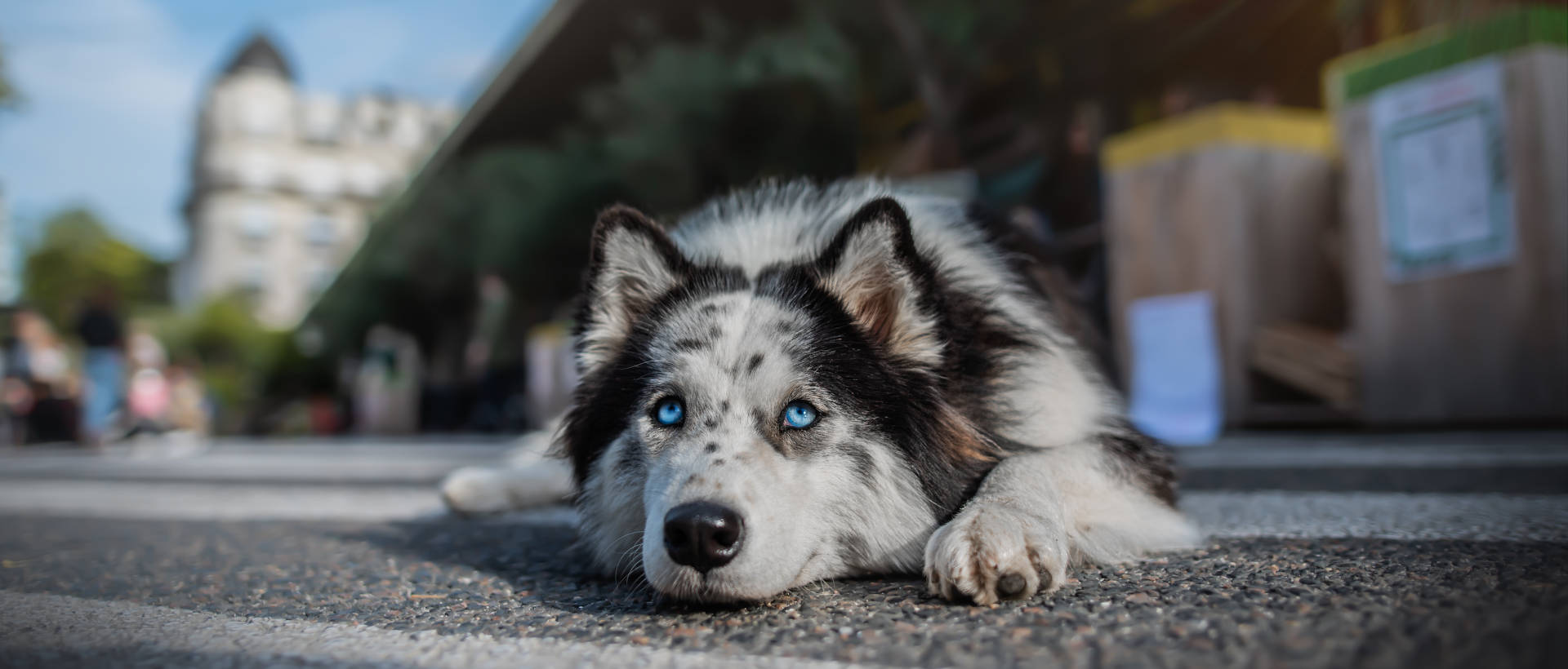 Dog Revolution 2016 - Evénement Animal University - Vivre et travailler dans le respect de l'animal
