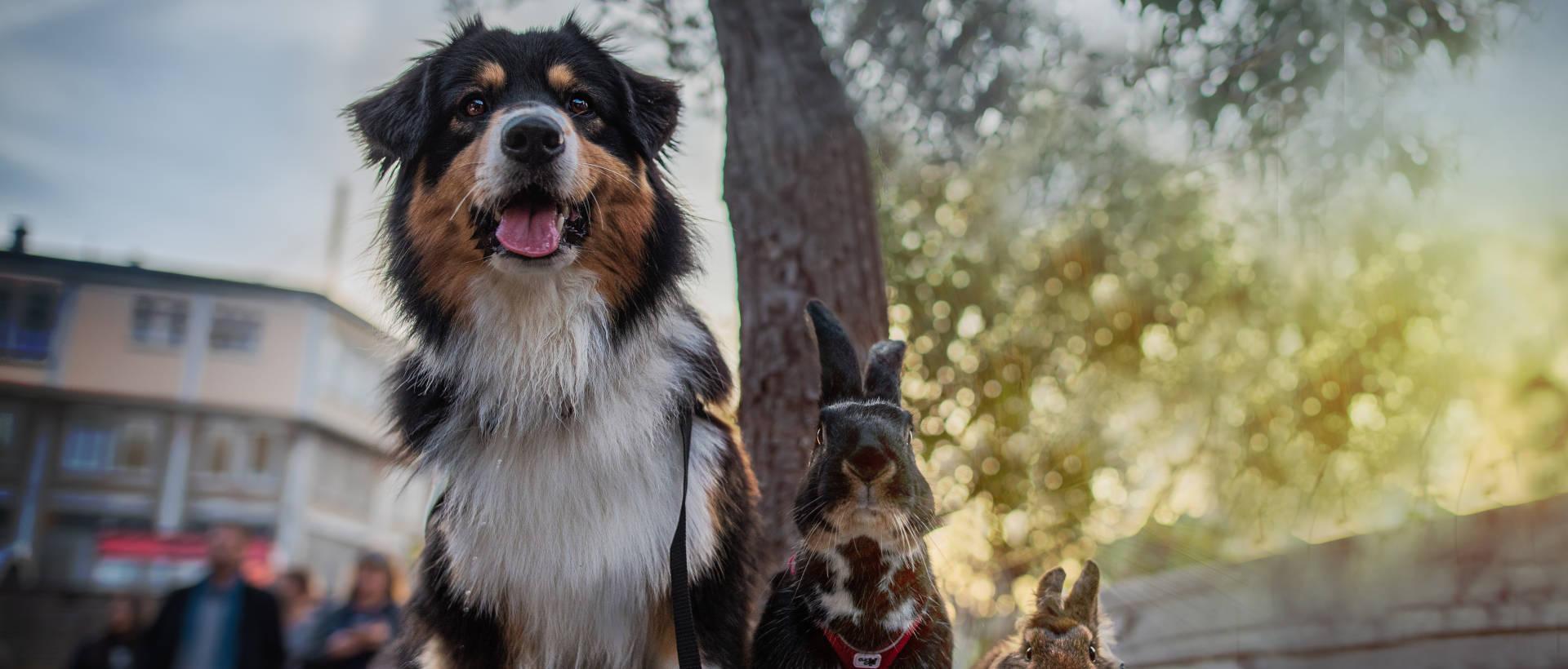 L'Animal en marche 2017 - Evénement Animal University - Vivre et travailler dans le respect de l'animal
