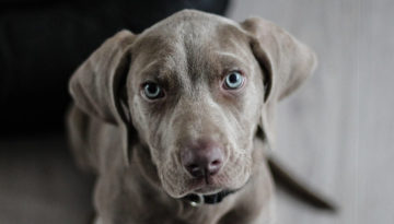La bienveillance dans le soin : regards croisés entre médecines humaine et vétérinaire - Evènement Animal University - Vivre et travailler dans le respect de l'animal
