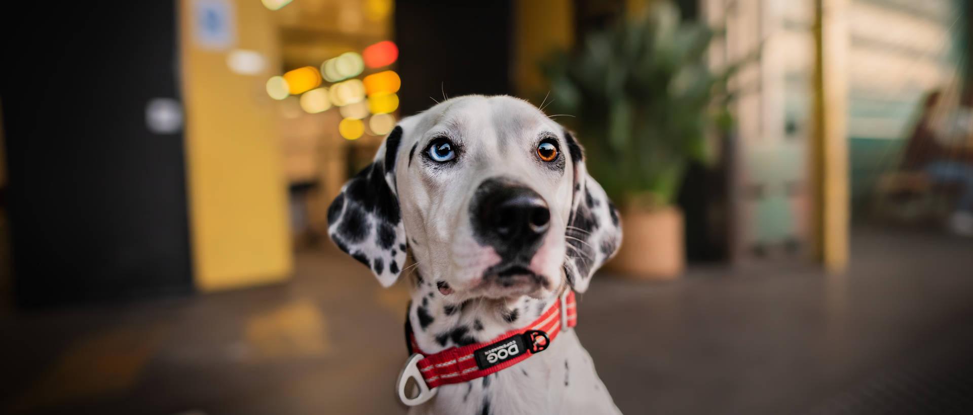 Pet & Co 2018 - Evènement Animal University - Vivre et travailler dans le respect de l'animal
