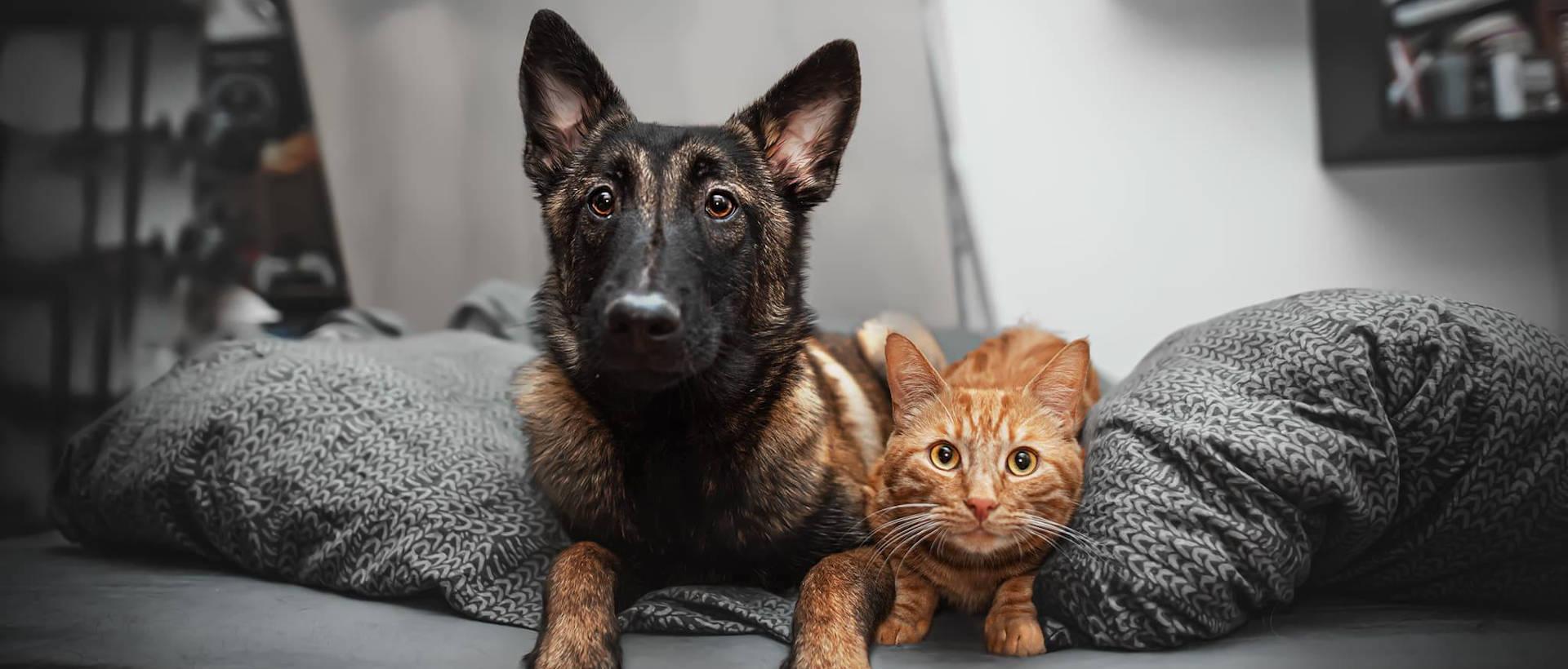 PET REVOLUTION - Evénement Animal University - Vivre et travailler dans le respect de l'animal
