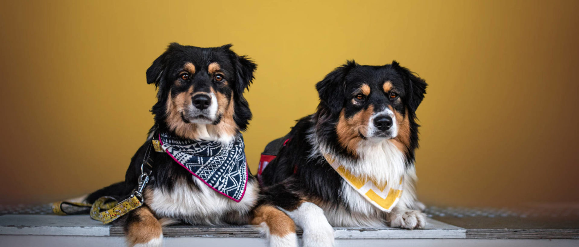 Evénements - Animal University - Vivre et travailler dans le respect de l'animal